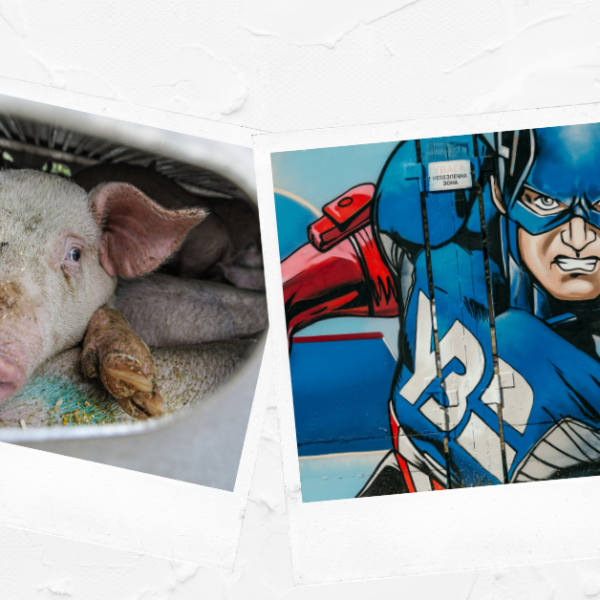 Pig and Captain America